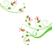 Floral background. Floral ornament, vector illustration for design Royalty Free Stock Images