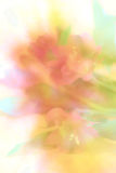 Floral Background. Soft delicate blurred floral background,digitally created Royalty Free Stock Photo