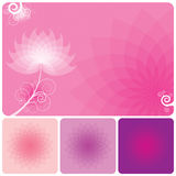 Floral Background. Abstract Pink floral background of spring Royalty Free Stock Photography