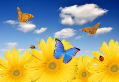 Floral background. Yellow gerberas with butterflies and ladybug Royalty Free Stock Images