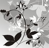 Floral background. Black & white floral background. Vector illustration Royalty Free Stock Images