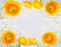Floral background. Yellow floral background over white Stock Photo