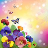 Floral background. Colorful pansies flowers Royalty Free Stock Photos