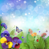 Floral background. Colorful pansies flowers Stock Photos