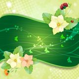 Floral background. Colorful pansies flowers Royalty Free Stock Image