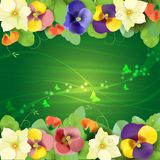 Floral background. Colorful pansies flowers Royalty Free Stock Photo