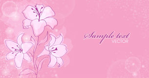 Floral background. With blooming lilies Stock Photography