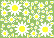 Floral Background. White and yellow flowers on the green background Stock Images