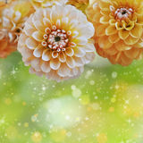 Floral background. Background with yellow flowers and shiny bokeh Stock Photos