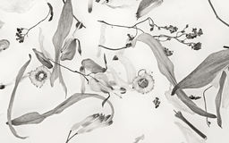 Dried flowers. Dried flower leafs and blossoms in black and white Royalty Free Stock Photography