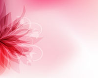 Floral background. Stock Images