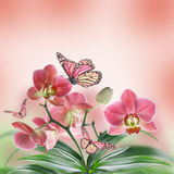 Floral background. Of tropical orchids and  butterfly Royalty Free Stock Photo