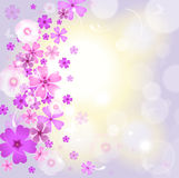 Floral background. With pink flowers Stock Images