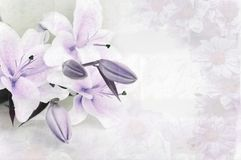 Floral background. Violet floral background with white lily Stock Photos