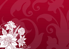 Floral background. A Floral design abstract background Royalty Free Stock Images