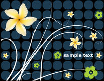 Floral background. Vector foliage aillustration, with decorative and yellow plumeria flowers Stock Photography