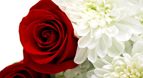Floral background. Red roses and white chrysanthemumon. Shallow DOF Stock Photography