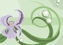 Floral background. An abstract floral background featuring an orchid stock illustration