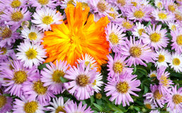 Floral background. A beautiful floral background of big flowers blooming Royalty Free Stock Image