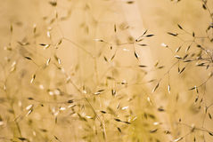 Floral background. Abstract background with wild meadow flowers can be used as layer stock photography