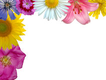 Floral background. Less than a flower box or isolated background Stock Photography
