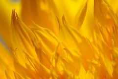 Floral background. Yellow-orange floral background royalty free stock images
