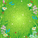 Floral background. With wildflowers and green swirly backdrop Stock Photo