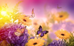Floral background. Amazing background with hydrangeas and daisies. Yellow and blue flowers on a white blank. Floral card nature. bokeh butterflies Stock Images