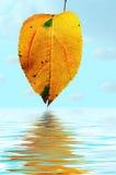 Floral background autumn tints Stock Photo