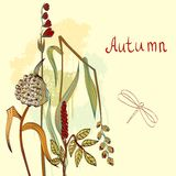 Floral background. Autumn. Vector floral background. Flower element for design Royalty Free Stock Image