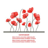 Floral background. Beautiful poppies  on white Stock Photo