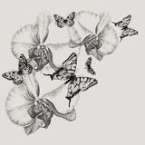Floral background with blooming orchids and butter. Flies, hand-drawing. Vector illustration Stock Photos