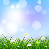 Floral background with blue sky, green grass and flowers Stock Photo