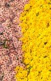 Floral background at botanical garden Royalty Free Stock Image
