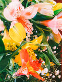Floral background from a bouquet of colorful flowers lilies closeup. Stock Photos