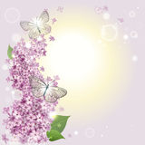Floral background with butterflies and a lilac. Greeting card with a lilac and butterflies Stock Photo