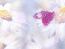 Floral background with a butterfly Royalty Free Stock Photography
