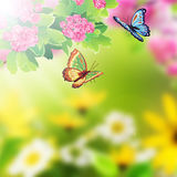 Floral background with butterfly and flowers. Solar flare Royalty Free Stock Image