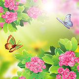 Floral background with butterfly and flowers. Solar flare Stock Photography
