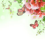 Floral background and butterfly Royalty Free Stock Photo