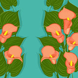 Floral background with calla flowers Stock Photos