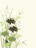 Floral background with chamomile Stock Image