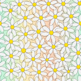 Floral background with chamomile. Vector eps10 illustration vector illustration