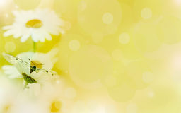 Floral background,chamomile  in the rays of light and butterfly.  Royalty Free Stock Image