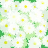 Floral background of chamomiles. Vector picture of transparent flowers stock illustration