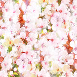 Floral background with cherry flowers Stock Photography