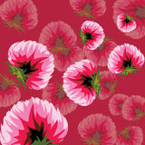 Floral background clover flowers Stock Image