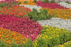Floral background. Colorful flower bed in city design Stock Photo