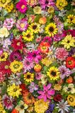 Floral Background. Background with colorful Spring flowers Royalty Free Stock Image