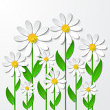 Floral background with 3d chamomiles. Paper art. Floral background with 3d chamomiles cutting paper isolated on white. Vector illustration Stock Image